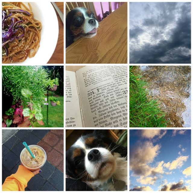 Dreams, etc. // August in Review.