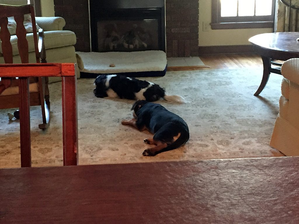 Little One spends a weekend with a rambunctious puppy. // dreams-etc.com