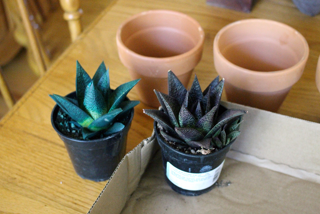 The story of the day I went to the store to buy one cactus and walked away with... quite a bit more! // dreams-etc.com