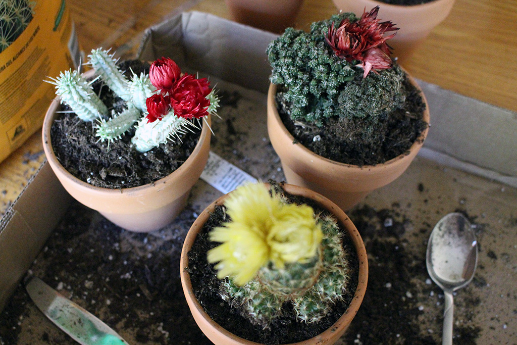 One Cactus Turned Into...