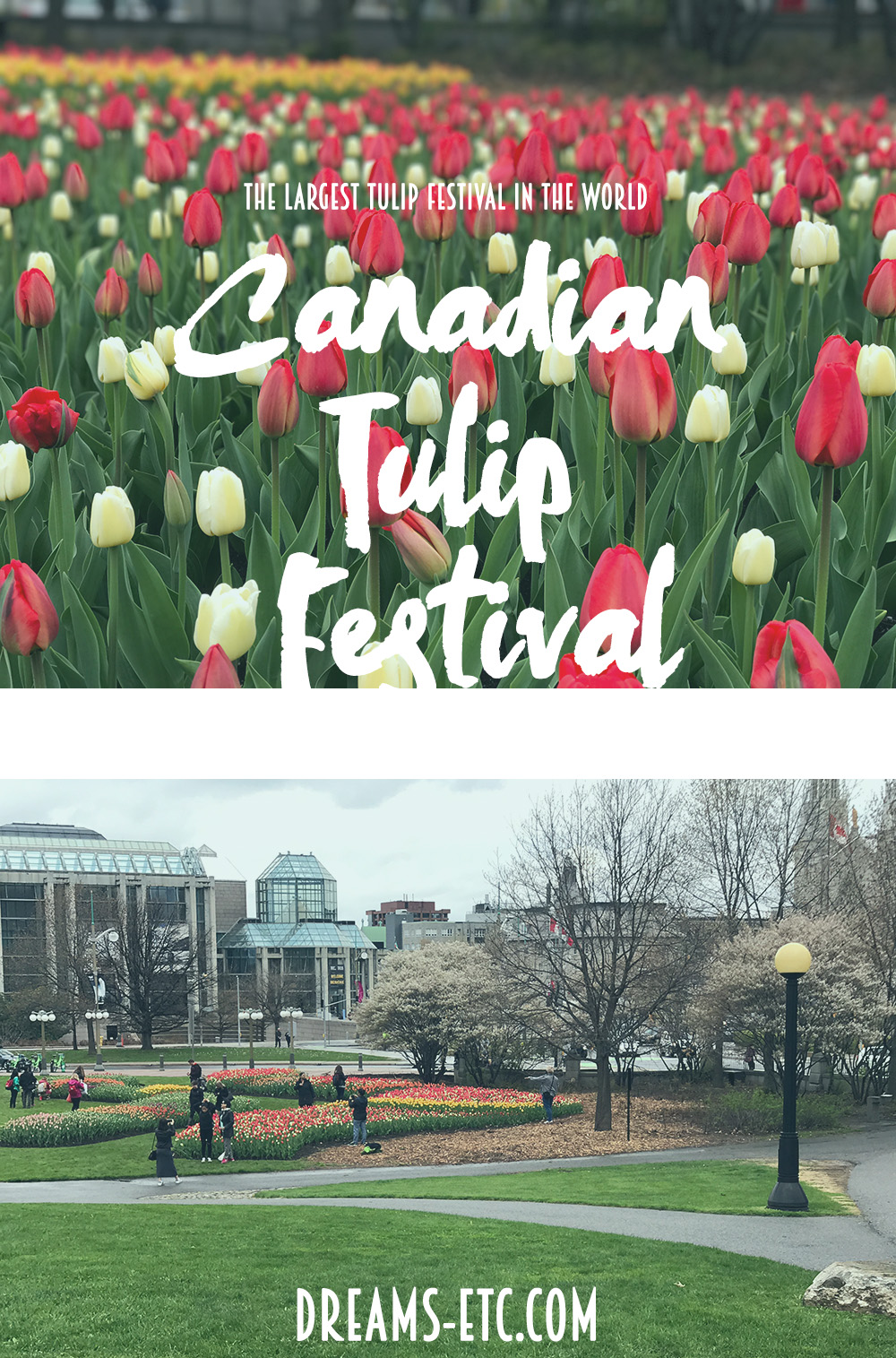 Ottawa is adorned with tulips each spring during the largest tulip in the world. Read about the history & see photos of the Ottawa Tulip Festival! // dreams-etc.com