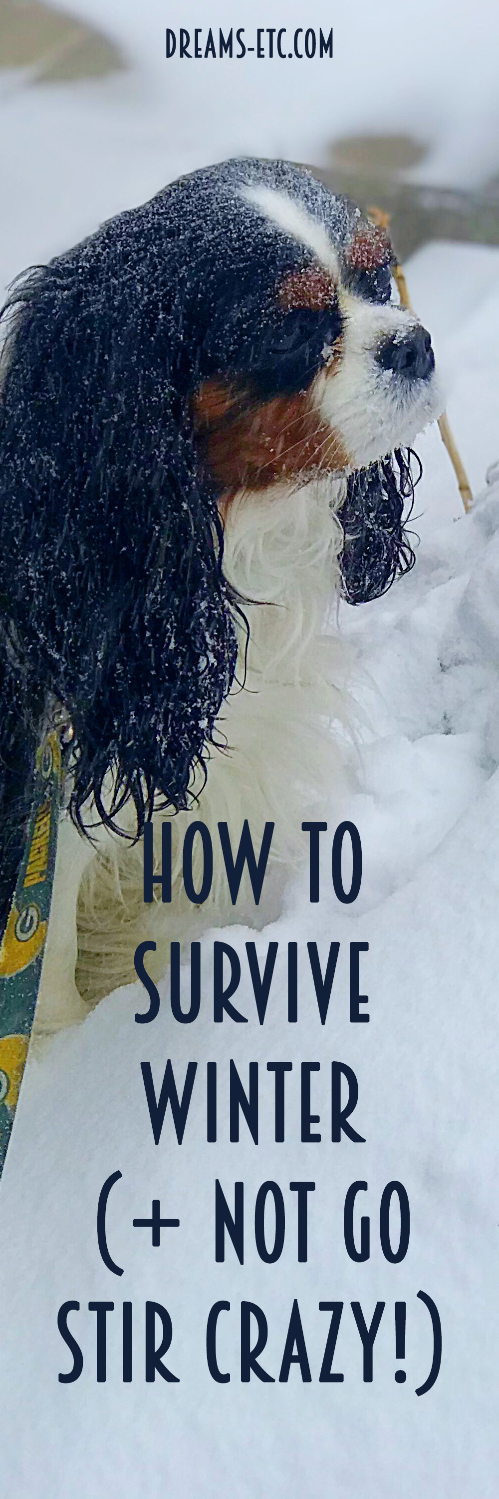 Winter: you either love it or you hate it. But even if you love it, there might be a time when you're ready to be done with it. Inspired by the millionth snowfall in Minnesota, here are 15 ways to survive an endless winter! // dreams-etc.com